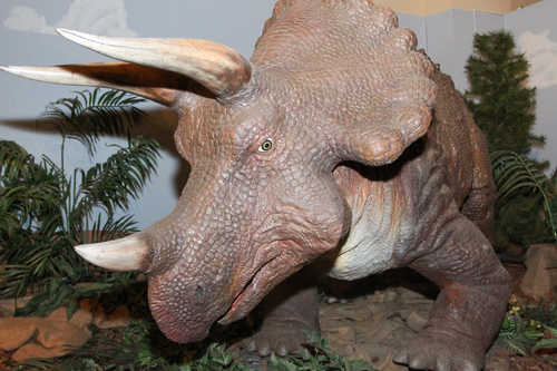 A vigilant Triceratops keeps a careful eye on Baby Jesus.
