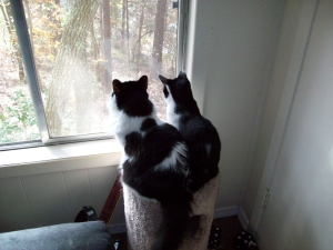 Likely one is watching squirrels and the other is watching birds.