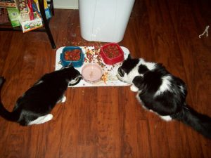nom nom nom (Old picture.  The Divas cat bowl has been replaced by a mechanism that Bella can't tip over so easily.)