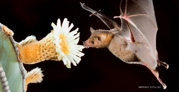bat pic 2