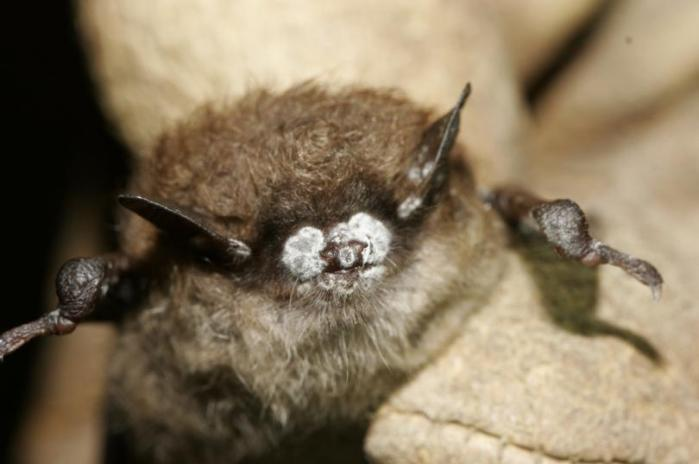 bat pic 3