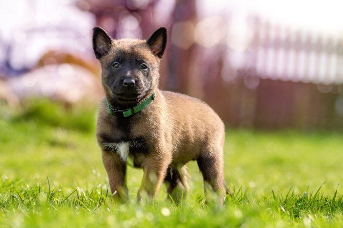 adorable-animal-blur-209115